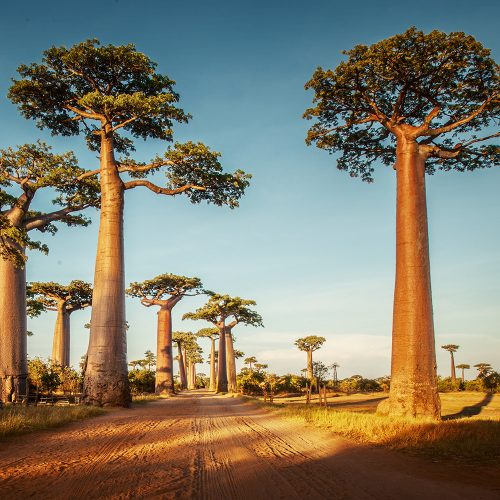 Circuit Madagascar