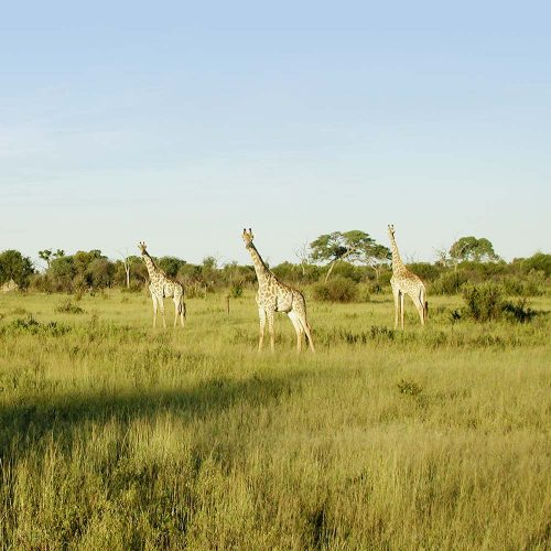 Circuit au Zimbabwe