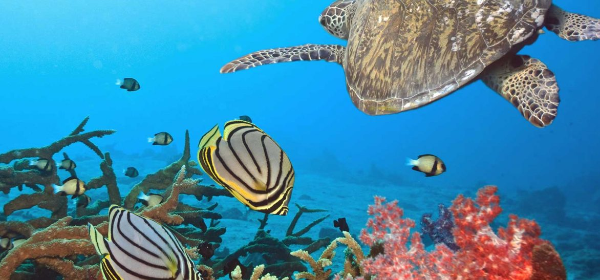 Plongée,, Maldives, Séjour, Océan Indien, Voyage, Vacances