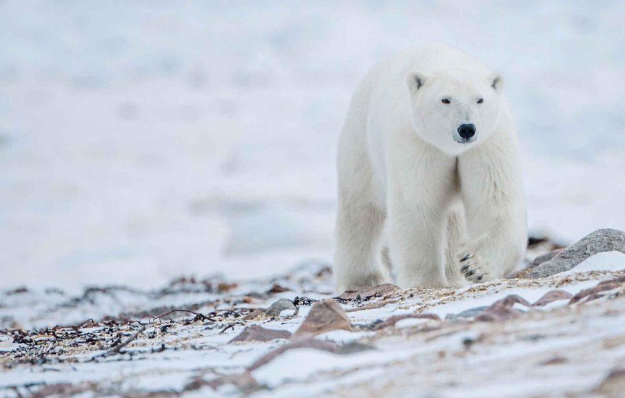 Voyage Groenland
