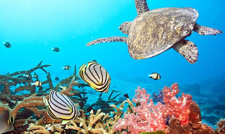 plongee maldives