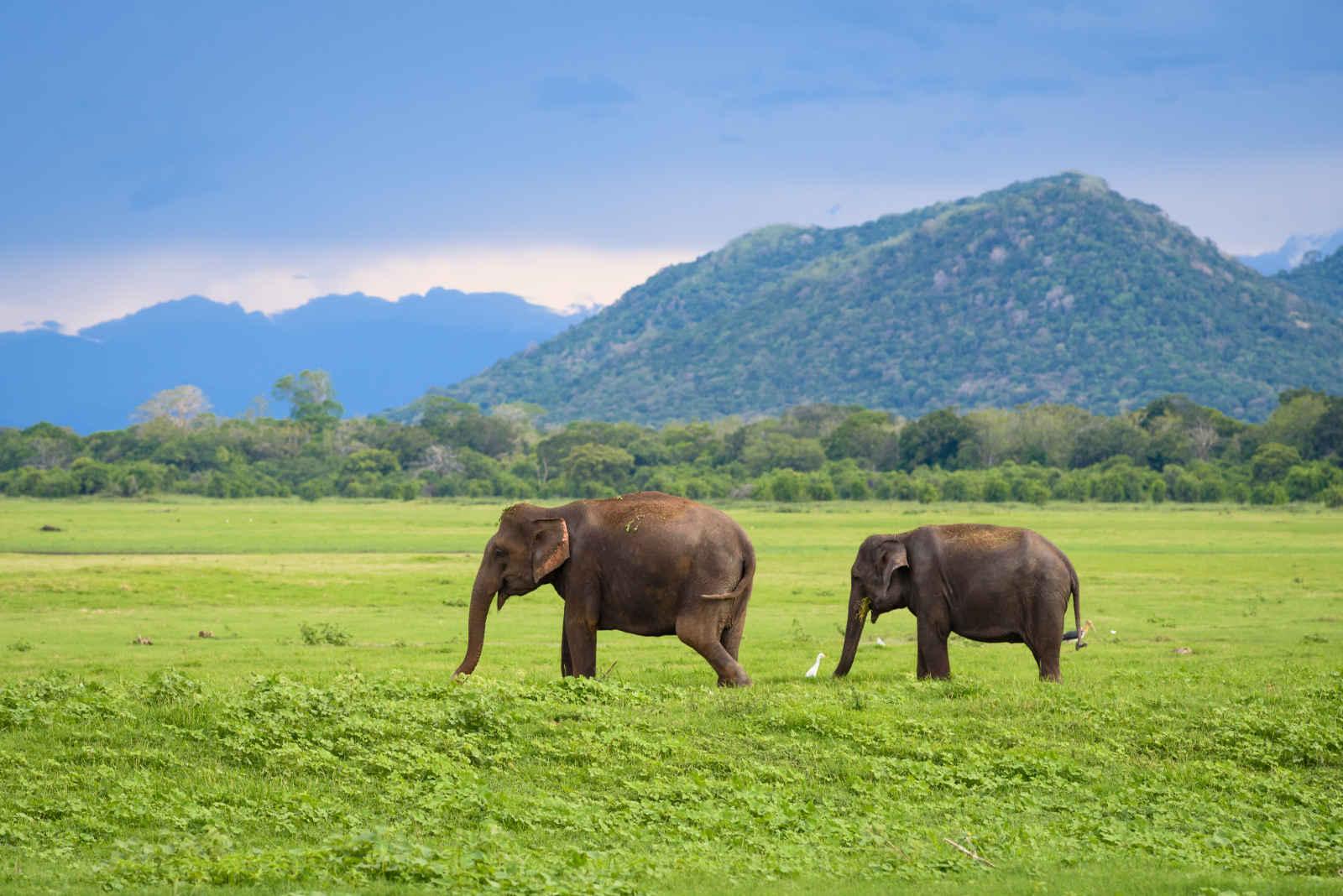 Sri Lanka : Mosaïques cinghalaises