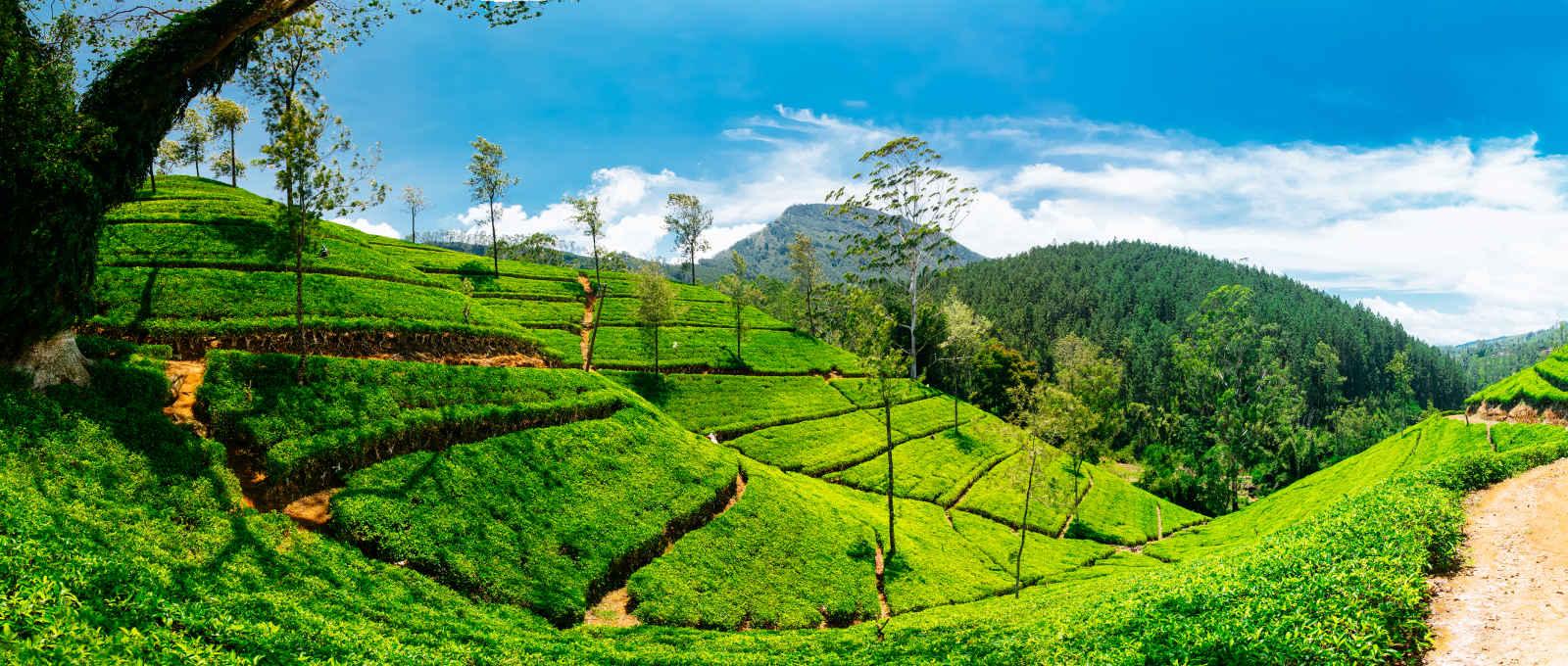 Sri Lanka : En pays cinghalais