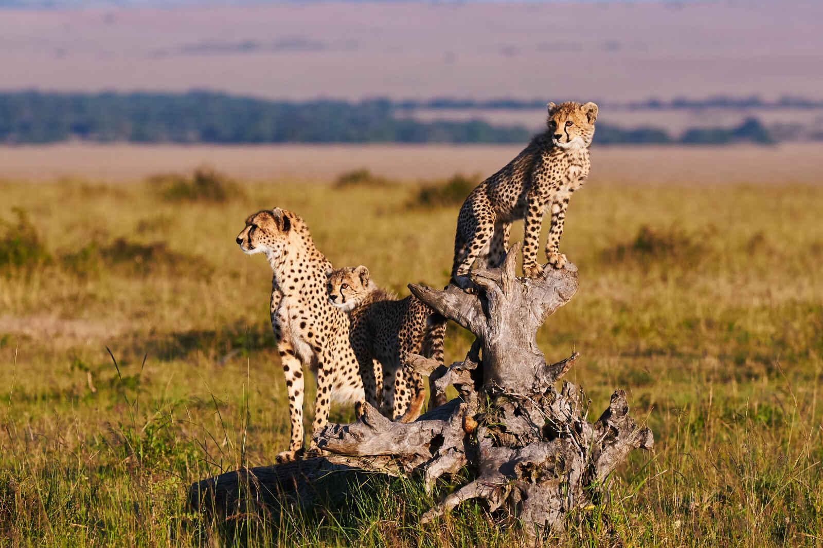 Tanzanie : Tanzanie grandeur nature