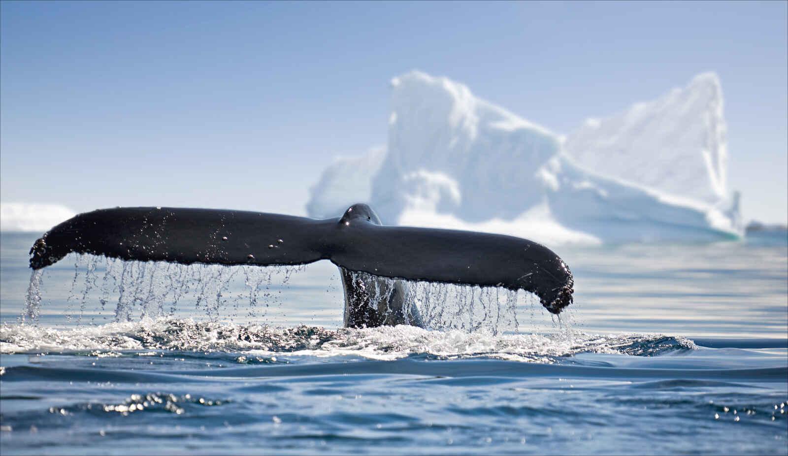 Argentine : Antarctique emblématique