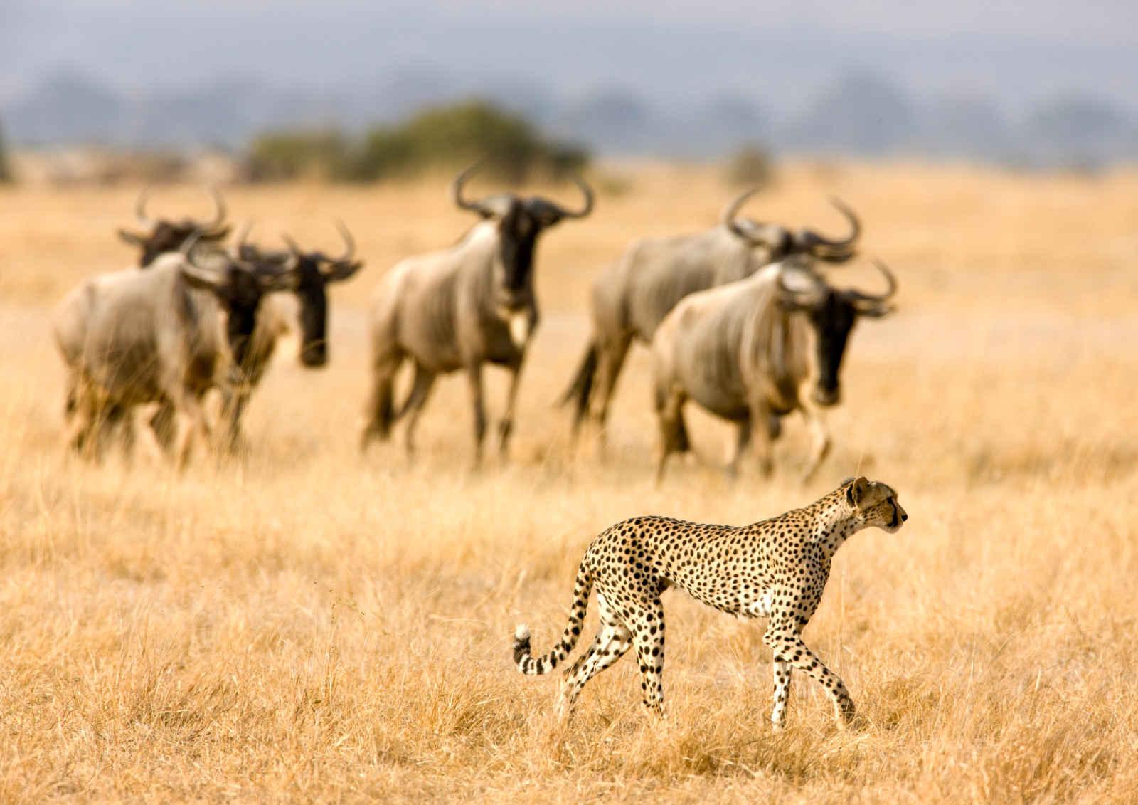 Kenya : Horizon Kenya