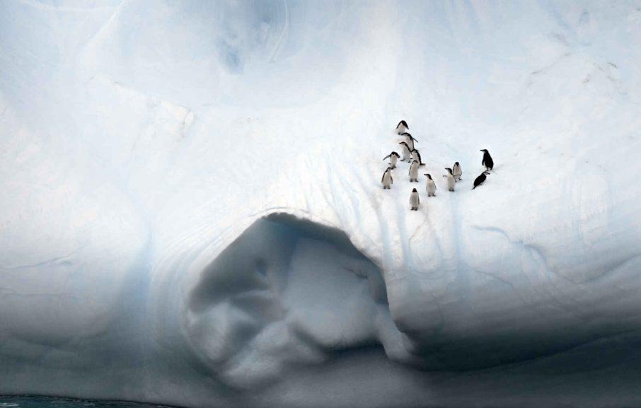 Manchots, passage de Drake, Antarctique